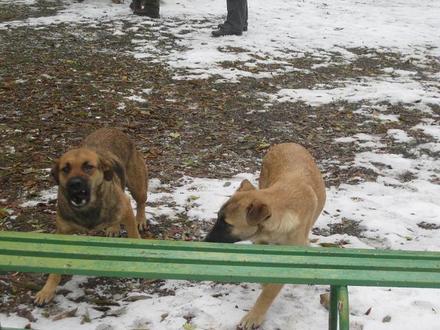 سگ های عصبانی پناهگاه کلک چال